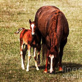Janice Rae Pariza - Season of the Foals