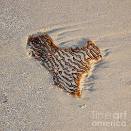 Debra Thompson - Seaweed Heart