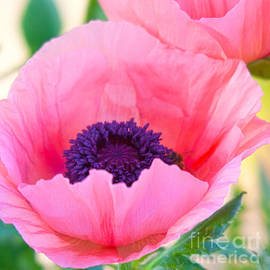 ROSELYNNE BROUSSARD - Seductive Poppy