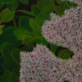 Tammy Powell - Sedum - Pretty in Pink