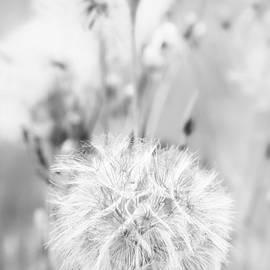 Jack Torcello - Seed Head 1