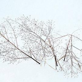 Marcia Lee Jones - Seeds On The Wind