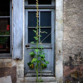 Lainie Wrightson - Seldom Used Door