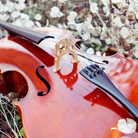 Mela Luna - Sensitive Field Cello