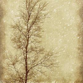 Nikolyn McDonald - Sentinel Tree in Winter