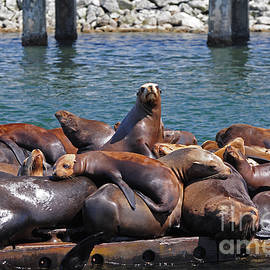 Susan Wiedmann - Sentry Sea Lion and Friends