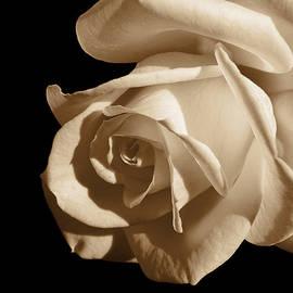 Jennie Marie Schell - Sepia Rose Flower Mirror Image