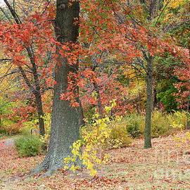 Photographic Art and Design by Dora Sofia Caputo - Serenity in Autumn