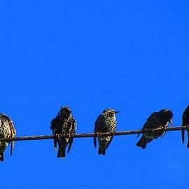 Callan Percy - Seven Birds