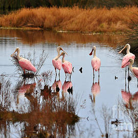 Al Powell Photography - Seven Spoonbills