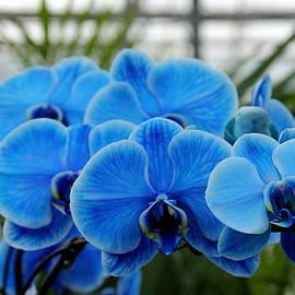 Debbie Oppermann - Shades Of Blue