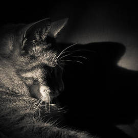 Loriental Photography - Shadow of a Cat