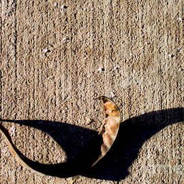 James Aiken - Shadow Play - Heron