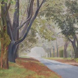 Barbara Barber - Shadow and fog down beautiful Atlantic Avenue