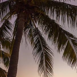 Kristopher Schoenleber - Shady Palm