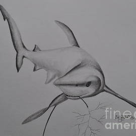 Sally Rice - Shark
