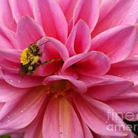 Lingfai Leung - She Must BEE From Pollen
