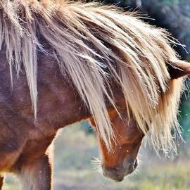 Kim Bemis - She Tossed Her Mane - Wild Pony of Assateague