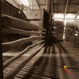 Michael Wignall - Shearing shed