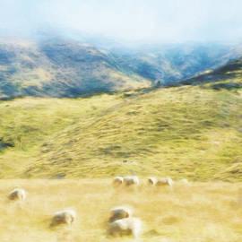Steve Taylor - Sheep Mist