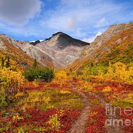 Susan Serna - Sheep Mountain in Autumn