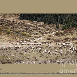 Janice Rae Pariza - Sheep Of His Pasture