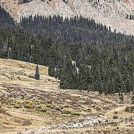 Janice Rae Pariza - Sheepherding Southwest Colorado