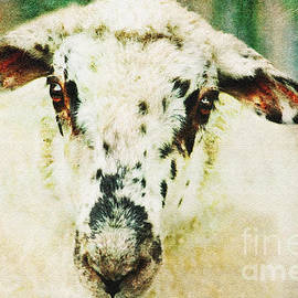 Janice Rae Pariza - Sheeps Head