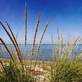 Shawna  Rowe - Sheldon Marsh Coastal Plants