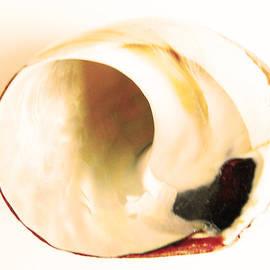 Lenore Senior - Shell Interpretations 1