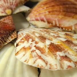 LeeAnn McLaneGoetz McLaneGoetzStudioLLCcom - Shells in the tide pool