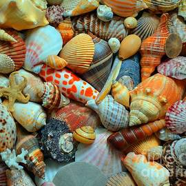 Kevin Fortier - Shells