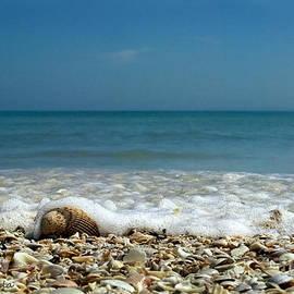 Gerald Marella - Shells surf and blue sky