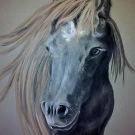 Gea Scheltinga - Shetland pony