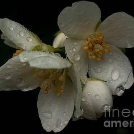 Theresa  Asher - Shine On - Delicate