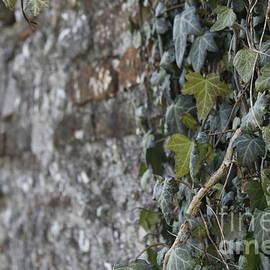 Donato Iannuzzi - Shoots Of Wall