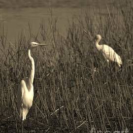 Bob Sample - Shore Birds In Sepia