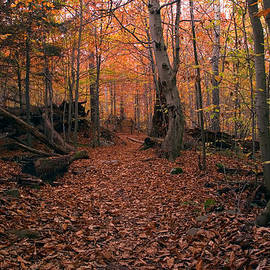 Gene Walls - Shortcut to Highland Trail