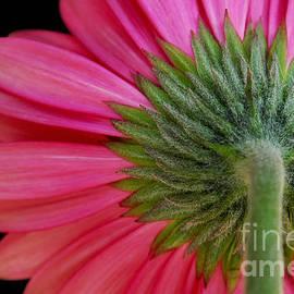 Dan Holm - Shy Flower