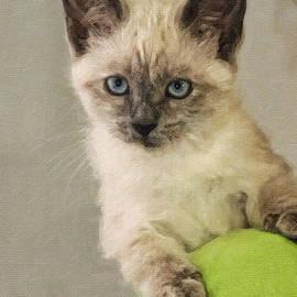 Kenny Francis - Siamese Kitten