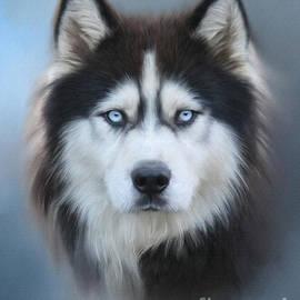 Lena Auxier - Siberian Husky