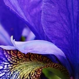 Bruce Bley - Siberian Iris Abstract