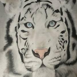 Caitlin Mitchell - Siberian Tiger