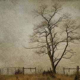 Kathy Jennings - Silent Solitude