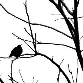 Karen  Majkrzak - Silhouette in Black and White