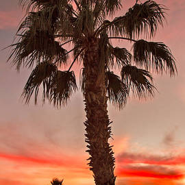 Robert Bales - Silhouetted Palm Trees II