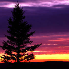 Optical Playground By MP Ray - Silhouetted tree at Brockway Mountain