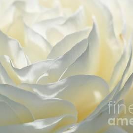 Elaine Manley - Silk Cream Floral