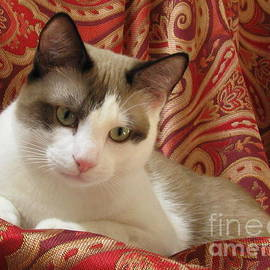 Pamela Benham - Kitten SilkTapestryCatsTM Beauty  Antonio Paisley Red Gold Chocolate White Green Eyes