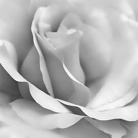 Jennie Marie Schell - Silver Ballerina Rose Flower